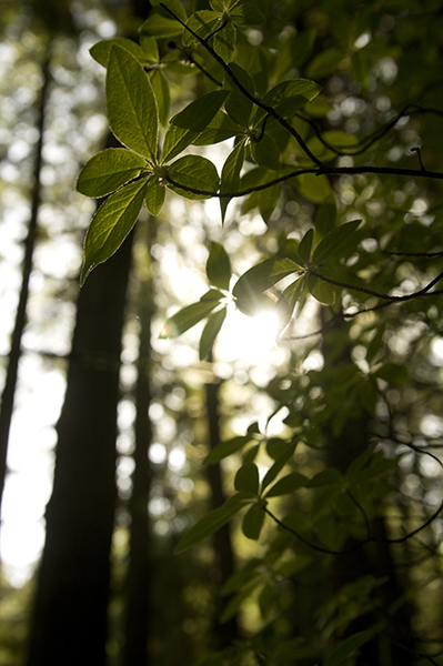 A Westcoast Forestscape Photograph by Juscha Grunther